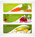 Corn radish carrot banners vector image vector image