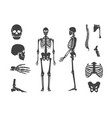silhouette black human skeleton and part set vector image vector image