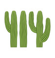colorful cartoon mexican cactus set vector image vector image