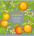 grapefruit frame vector image