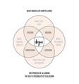 ikigai work life balance concept vector image