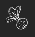 kohlrabi chalk white icon on black background vector image vector image
