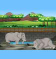 scene with two elephants at zoo vector image