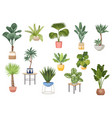set potted palm trees ficus agave monstera vector image