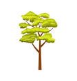 oak green tree isolated icon vector image