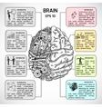 Brain hemispheres sketch infographic vector image