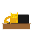 cat laptop working pet and notebook vector image vector image