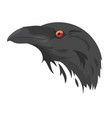 head a black crow a cartoon portrait a rook vector image