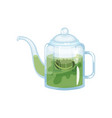 natural green herbal tea in a glass transparent vector image vector image