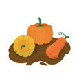 pumpkins group on ground vector image vector image