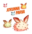 Set of sea cute slug Jorunna Parva vector image vector image