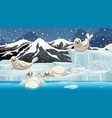 winter scene with four seals on ice vector image vector image