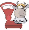 A small cow and weighing scale Cartoon vector image