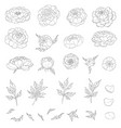 big set peony flowers and leaves for making vector image vector image