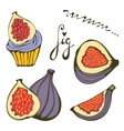 Hand drawn figs and fig cupcake vector image vector image