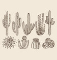 sketch hand drawn cactuses and vector image vector image