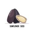 sunflower seeds organic healthy vegetarian food vector image