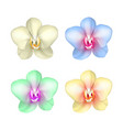 colored exotic orchid set realistic isolated vector image