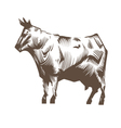 Cow isolated on a white backgrounds vector image vector image