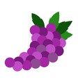 isolated grapes fruit vector image