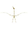 Pterodactyl skeleton vector image vector image