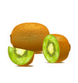 realistic detailed 3d whole kiwi vector image vector image