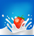 drops milk strawberry splash dairy vector image