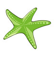 green starfish on white background vector image