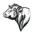 head of bull of dangus breed drawn in vintage vector image vector image