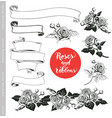 Set of white roses and ribbons in engraving style vector image