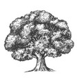 tree hand drawn realistic vector image vector image