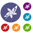vanilla sticks with a flower icons set vector image vector image