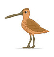 asian dowitcher bird on a white background vector image vector image