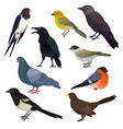 detailed icons of different species of vector image vector image