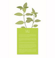 sage spice greenery isolated plant banner vector image