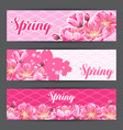 spring banners with sakura or cherry blossom vector image