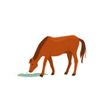 brown horse eat grass vector image