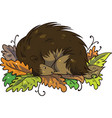 hedgehog hibernating during winter in pile of leav vector image