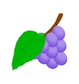 Blue grapes bunch isometric 3d icon vector image vector image