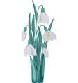 bouquet of snowdrops vector image vector image