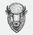 buffalo head vector image vector image