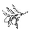 Black olive symbol