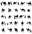 Camel silhouette set vector image vector image