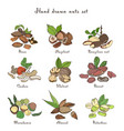 nuts set different kinds collection with almond vector image