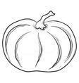 pumpkin contours vector image