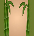 bamboo poster template for design vector image