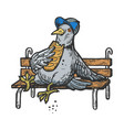 dove pigeon eat bread on bench engraving vector image vector image