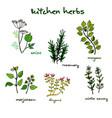 fresh kitchen herbs vector image vector image
