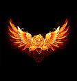 fire rose with wings vector image