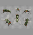 fly set realistic dirt insects pests decent vector image vector image